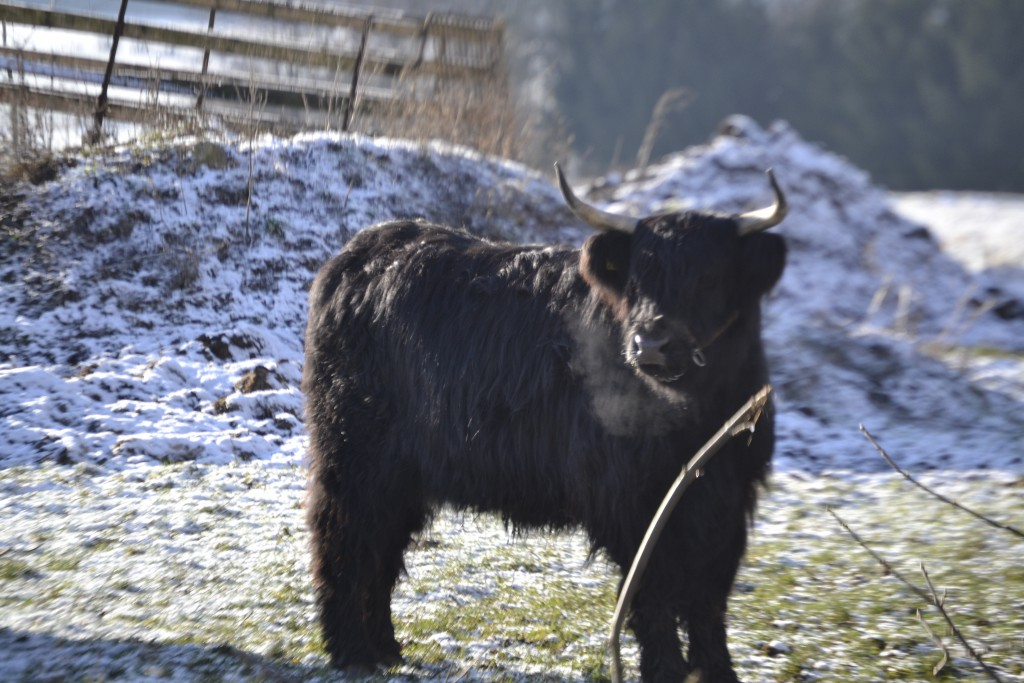 Alannah 18 vom Wartenberg im Januar 2013