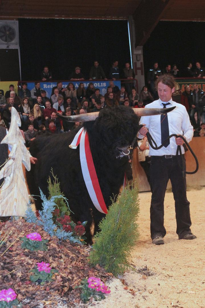 266  Hessen-Champion 273 Darius II. v Darius Wolfgang Richter, Sinntal