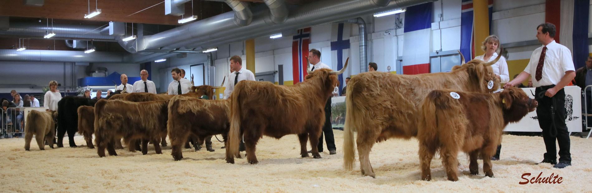 280 Kühe mit Kalb bei Fuss Klasse 5