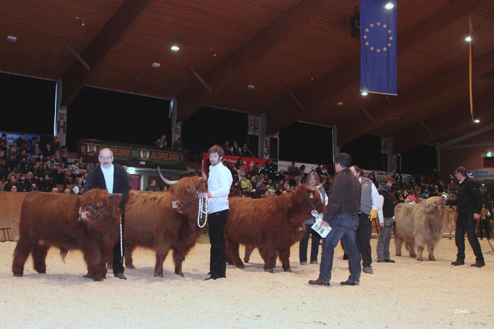 132  Schauklasse 14.1 Highland - Kühe mit Kalb