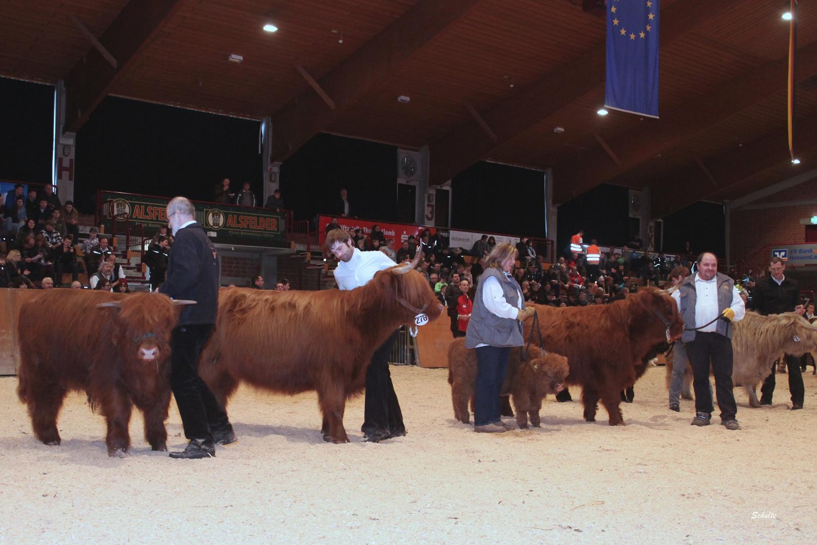 138  Schauklasse 14.1 Highland - Kühe mit Kalb